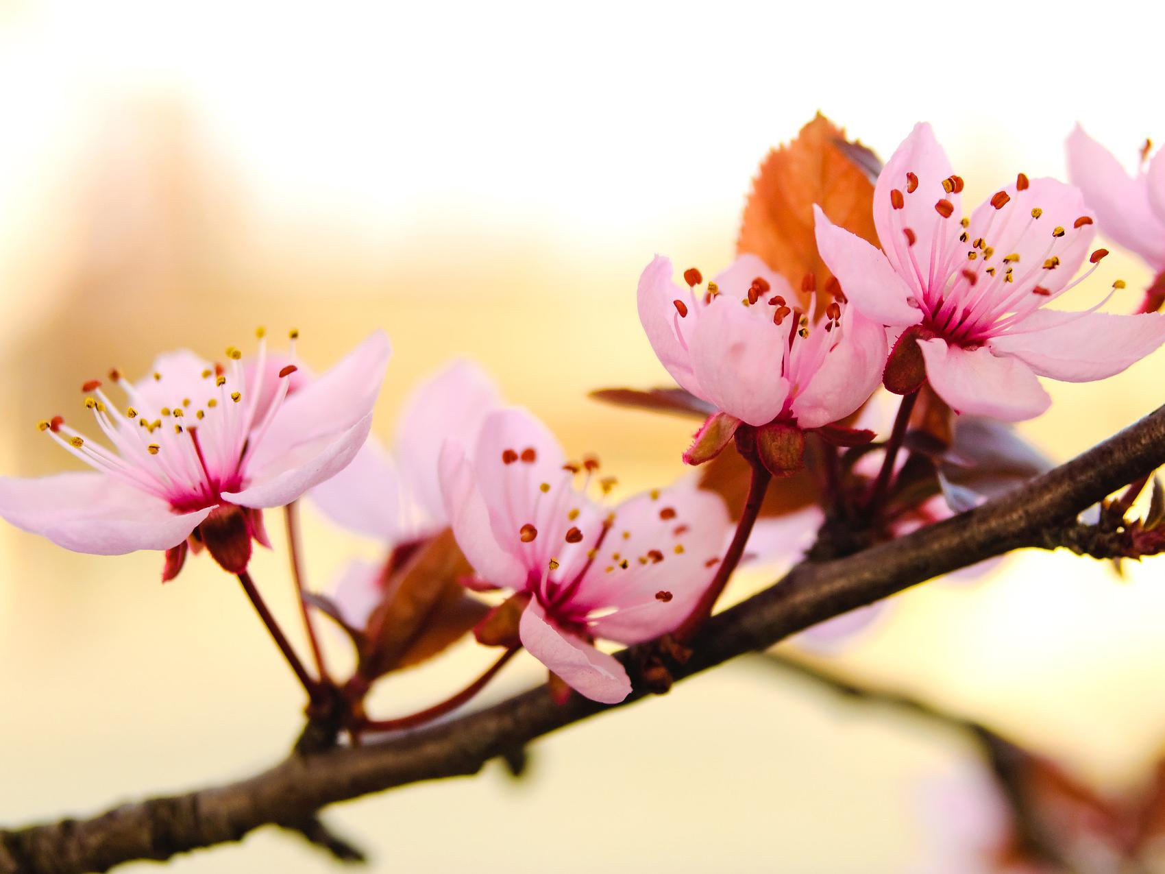 flower-3145717_19201